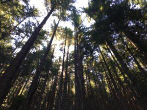 Mailbox Peak Trail trees