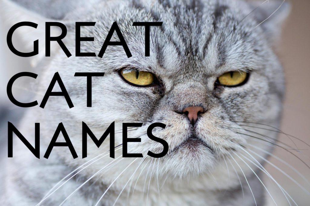 great cat names