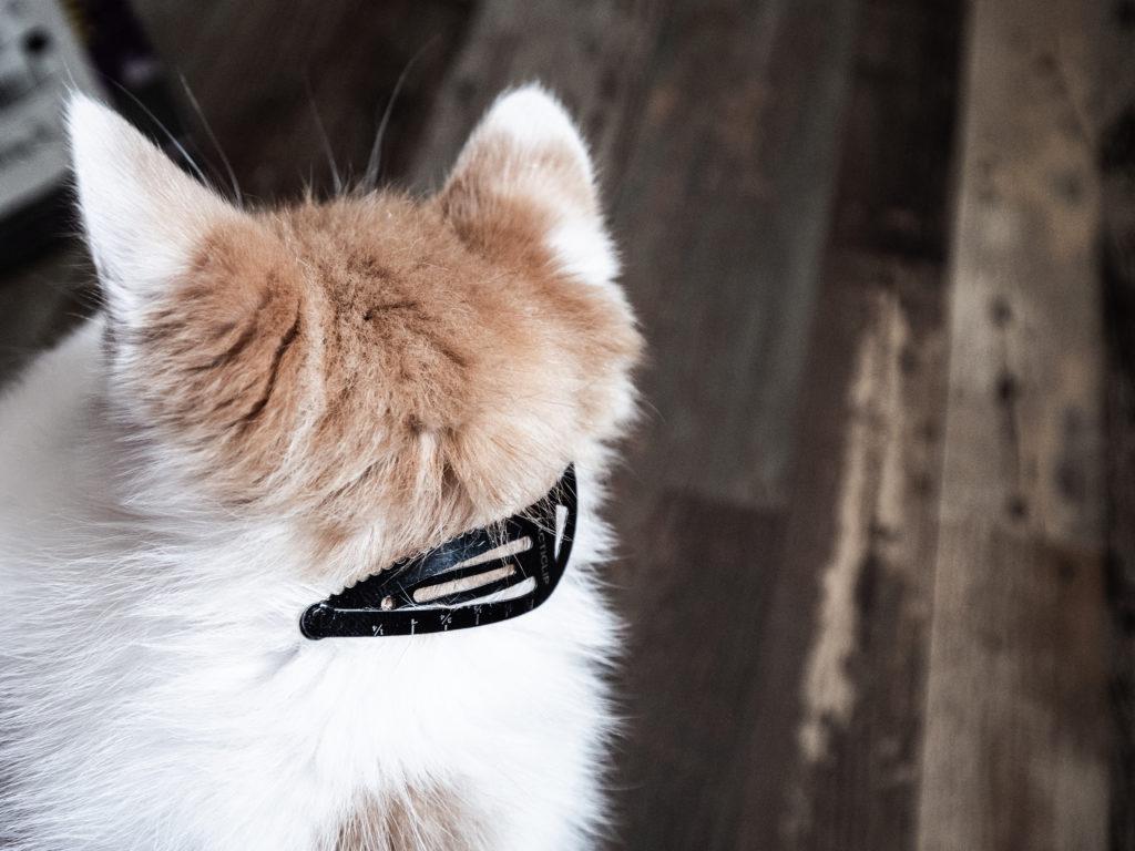 tacticlip multi tool keychain on a cat kitten